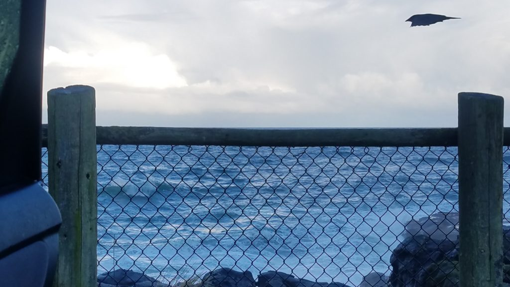 Waves on the Pacific ocean are visible beyond a chainlink fence with wooden posts with a gray sky. A bird can be seen flying by and the inside of an out-of-focus and open car door is visible on the left side of the frame. The sky is gray and cloudy.