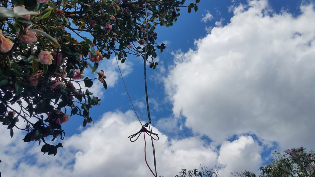 Roll-up J-Pole antenna hung in a rose bush