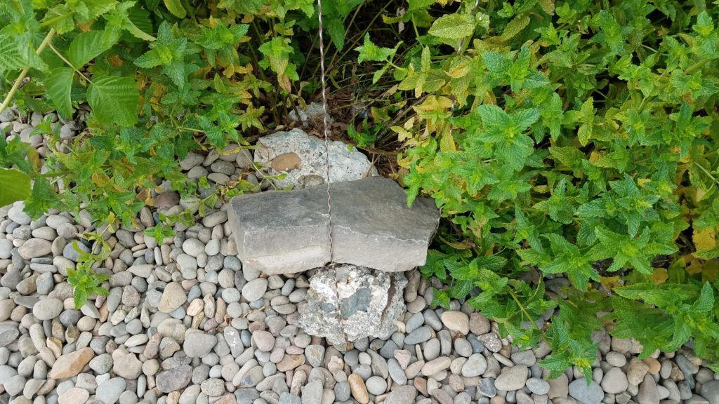 """Paracord tied around two rocks being used as a center point anchor with two """"wings"""" going two directions. Mint and raspberry plants are behind the rocks."""